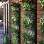 giardino verticale a casa tua