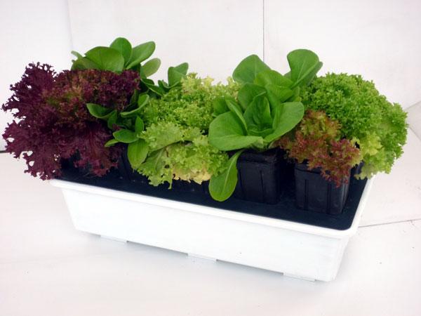Come creare un orto sul balcone di casa mondofamiglia - Creare un giardino sul balcone ...
