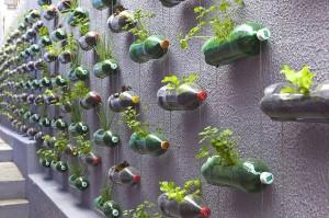 realizzare giardino verticale con bottiglie