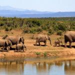 viaggio in africa